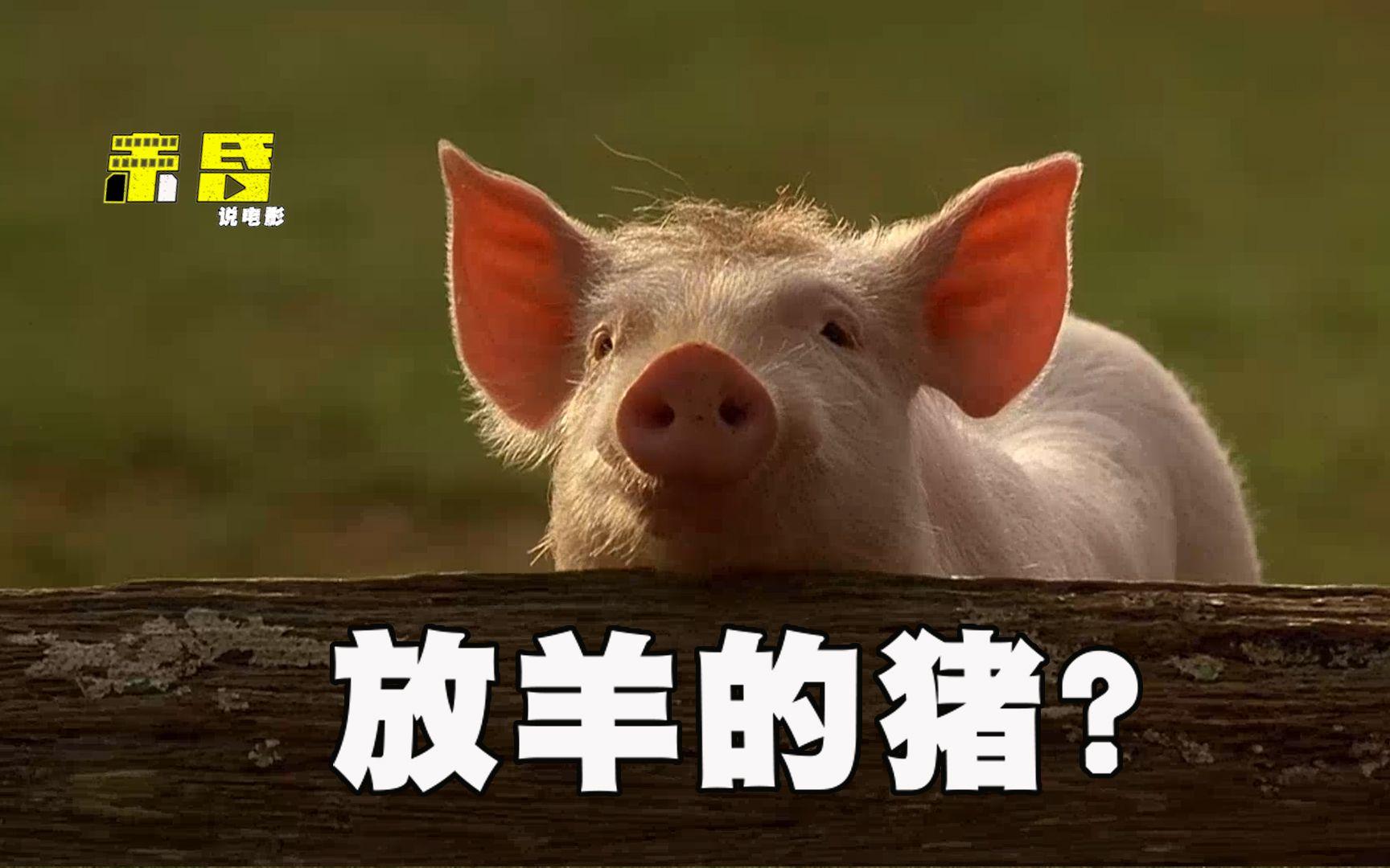 你见过放羊的猪么?他来了